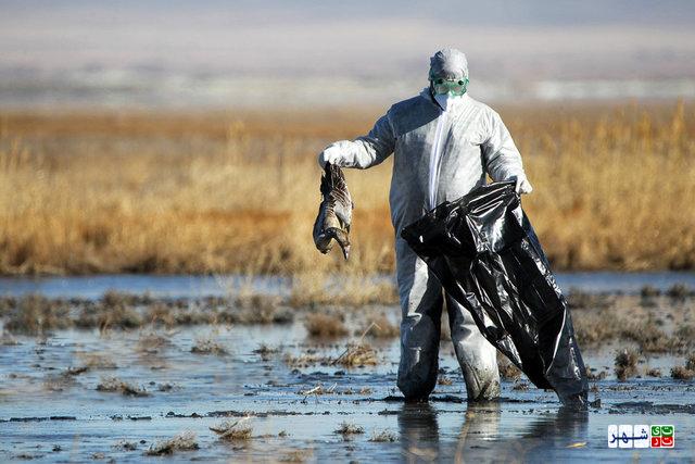 مشاهده موارد انسانی آنفلوآنزای جدید مرغی در چین + توصیه مهم وزارت بهداشت